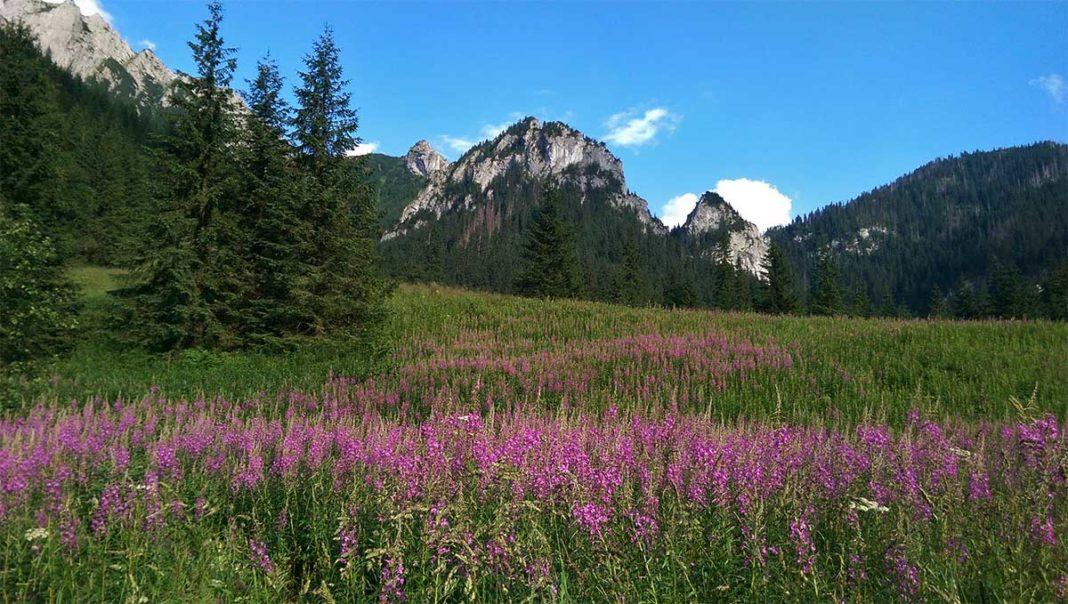 Tatrzańskie szlaki i roślinność