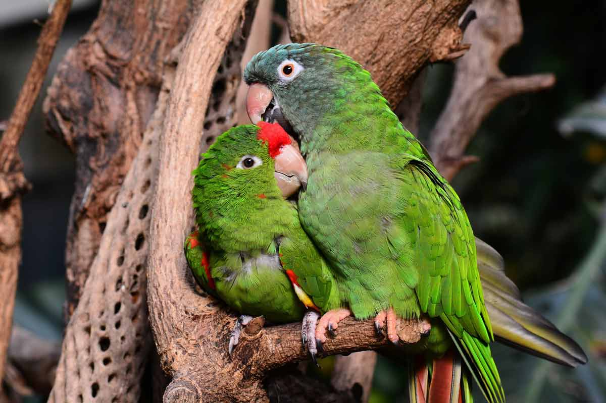 Papugarnia - papugi