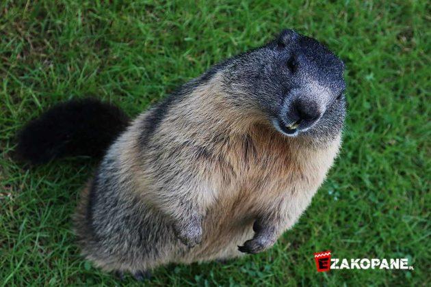 Tatrzański Park Edukacyjny - ZwierzOgród