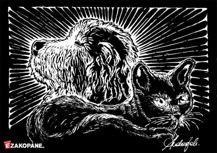 Jak kot Maciek zerwał przyjaźń z Owczarkiem Harnasiem