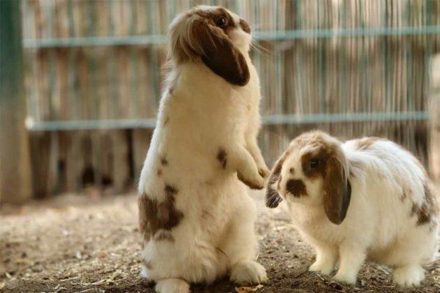 Królikarnia Zakopane, króliki