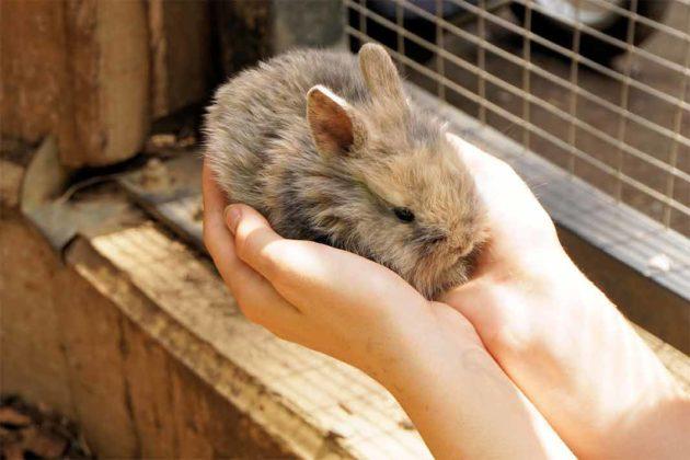 Królikarnia Zakopane, królik na rękach